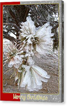 Western Themed Christmas Card Pine Needles And Ice Canvas Print by Amanda Smith