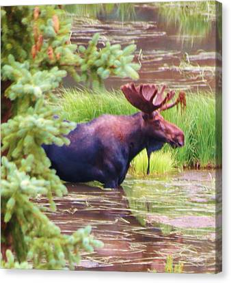 Wet And Wild Canvas Print by Feva  Fotos
