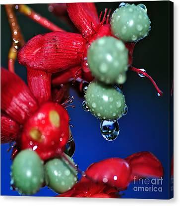 Wet Berries Canvas Print by Kaye Menner