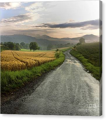 Wet Road Through Fields Of Wheat. Auvergne. France. Canvas Print by Bernard Jaubert