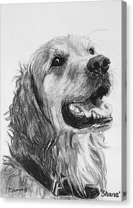 Wet Smiling Golden Retriever Shane Canvas Print by Kate Sumners