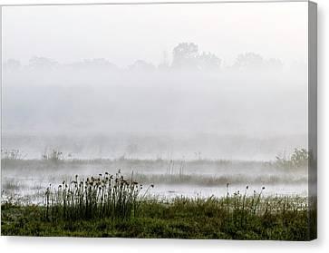 Wetlands In Mist Canvas Print by K Jayaram