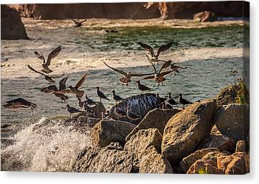 Whalers Cove Birds Canvas Print by Mike Penney