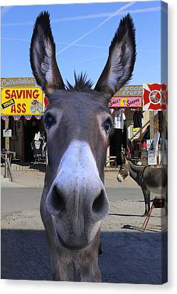 What . . . No Carrots Canvas Print by Mike McGlothlen