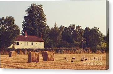 Wheat Field And Geese At Harvest Canvas Print by John Clark