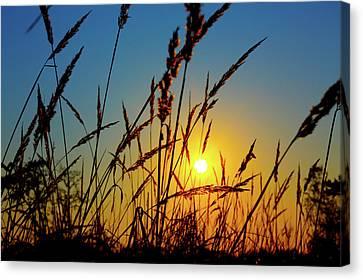 Wheat Field In Sunrise Canvas Print by Wladimir Bulgar