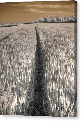 Wheat Field Canvas Print by Jane Linders