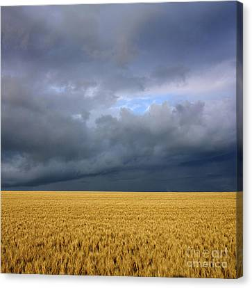 Wheat Field Under A Overcast. Auvergne. France. Canvas Print by Bernard Jaubert
