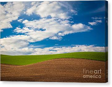 Wheat Wave Canvas Print by Inge Johnsson