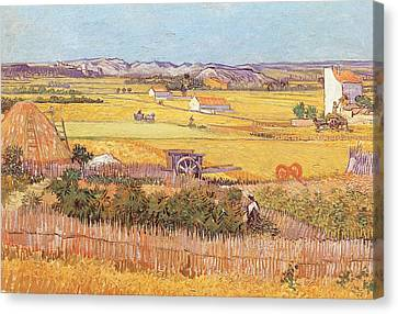 Wheatfields Canvas Print by Vincent van Gogh