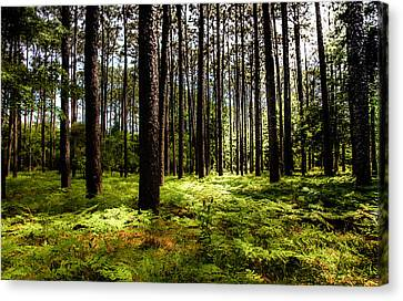 When The Forest Beckons Canvas Print by Karen Wiles