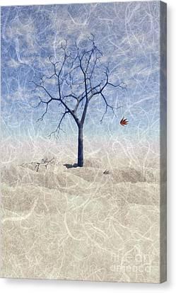 When The Last Leaf Falls... Canvas Print by John Edwards