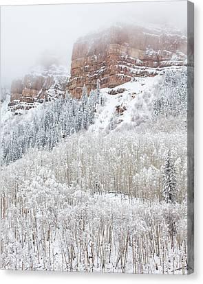 When Winter Falls Canvas Print by Darren  White