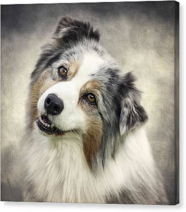 Australian Shepherd Portrait Canvas Print by Wolf Shadow  Photography