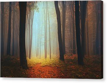 Where Fairies Live Canvas Print by Toma Bonciu