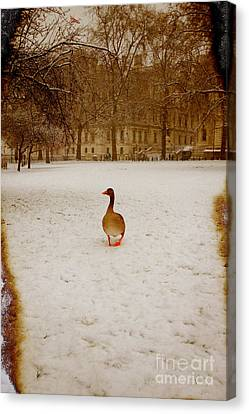 Where Is Everyone Canvas Print by Jasna Buncic