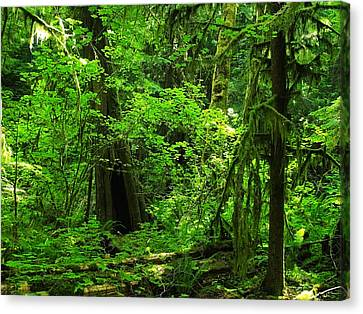 Where The Forest People Live Revised Canvas Print by Teri Schuster