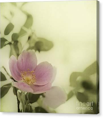 Where The Wild Roses Grow Canvas Print by Priska Wettstein