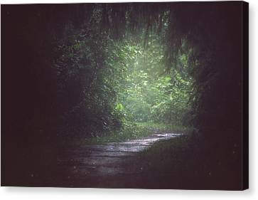 Wherever The Path May Lead Canvas Print by Carrie Ann Grippo-Pike