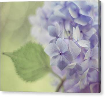 Whisper Canvas Print by Amy Tyler