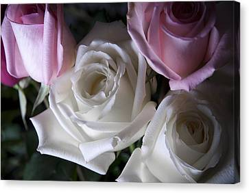 White And Pink Roses Canvas Print by Jennifer Ancker