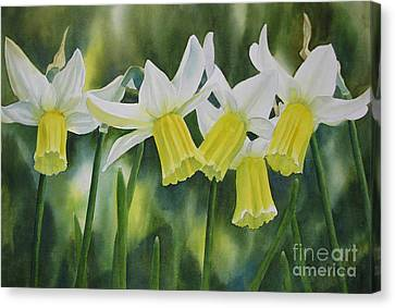 White And Yellow Daffodils Canvas Print by Sharon Freeman