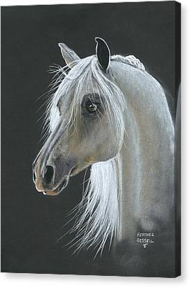 White Arabian Canvas Print by Heather Gessell