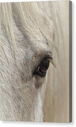 White Beauty D1412 Canvas Print by Wes and Dotty Weber