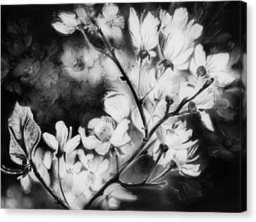 White Blossom Canvas Print by Natasha Denger