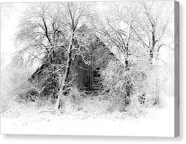 White Christmas 1 Canvas Print by Julie Hamilton
