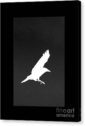 White Crow Canvas Print by Linsey Williams