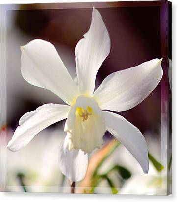 White Daffodil Canvas Print by Toppart Sweden