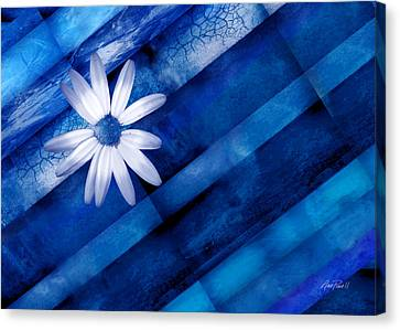 White Daisy On Blue Two Canvas Print by Ann Powell
