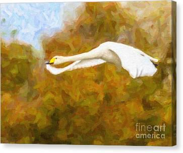 White Flight Canvas Print by Liz Leyden