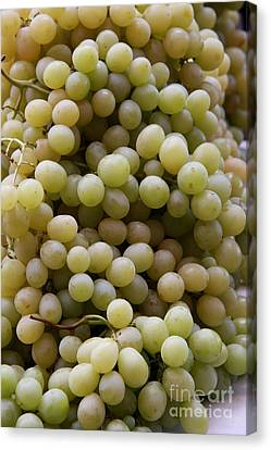 White Grapes Canvas Print by Christiane Schulze Art And Photography