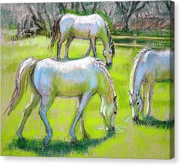 White Horses Grazing Canvas Print by Sue Halstenberg