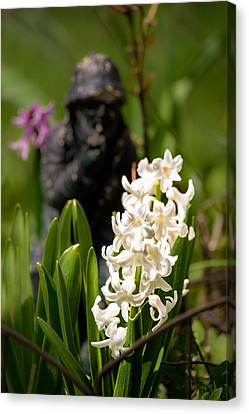 White Hyacinth In The Garden Canvas Print by  Onyonet  Photo Studios