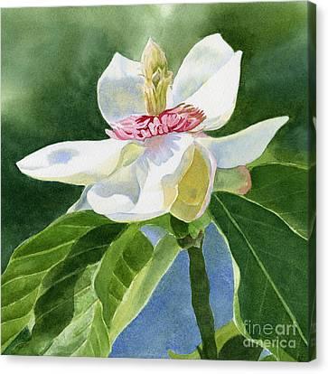 White Magnolia Square Design Canvas Print by Sharon Freeman