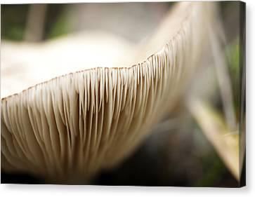 White Mushroom Gills Closeup Canvas Print by Marilyn Hunt