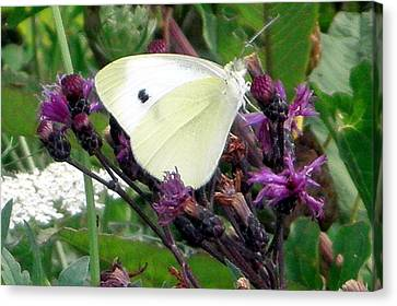 White On Purple On Green Canvas Print by Robert Lance