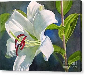 White Oriental Lily Canvas Print by Sharon Freeman