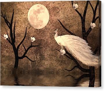 White Peacock Canvas Print by Sharon Lisa Clarke