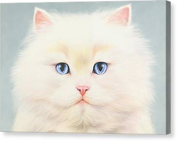 White Persian Canvas Print by Andrew Farley