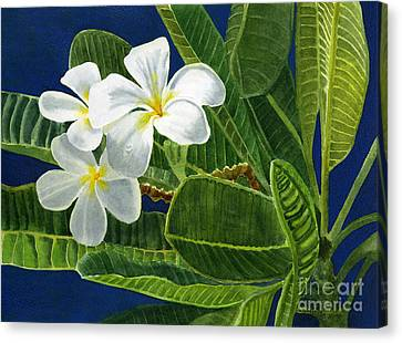 White Plumeria Flowers With Blue Background Canvas Print by Sharon Freeman