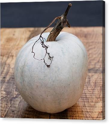 White Pumpkin Canvas Print by Indigo Schneider