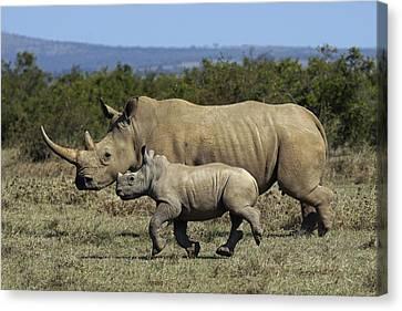 White Rhinoceros And Calf Kenya Canvas Print by Hiroya Minakuchi