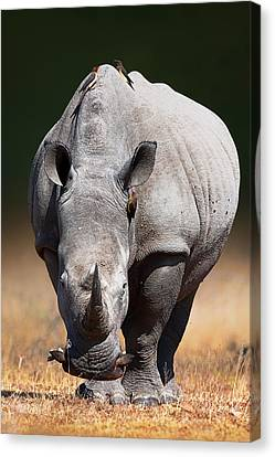White Rhinoceros  Front View Canvas Print by Johan Swanepoel