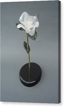 White Rose Canvas Print by Leslie Dycke