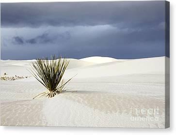 White Sands Dark Sky Canvas Print by Bob Christopher
