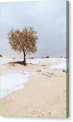 White Sands Lone Tree Canvas Print by Brian Harig